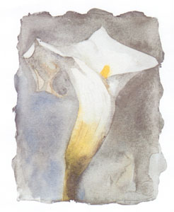 Arum Lilly II