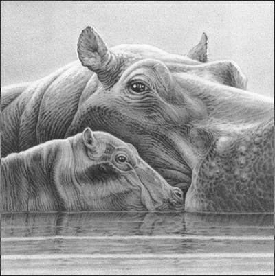 Baby Love - Hippos by Gary Hodges