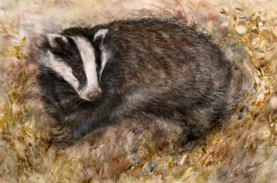 badgers-rest-18371