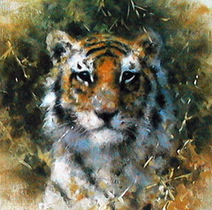 Bengal Tiger - Cameo Collection by David Shepherd