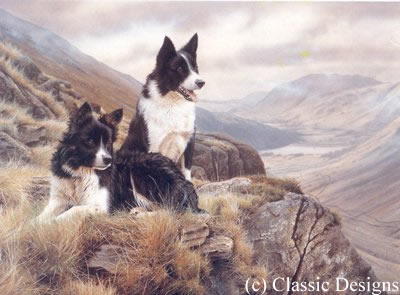 Bill & Ben - Border Collies