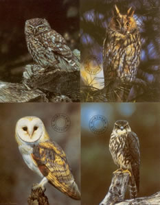 Birds Of Prey - Set of 4