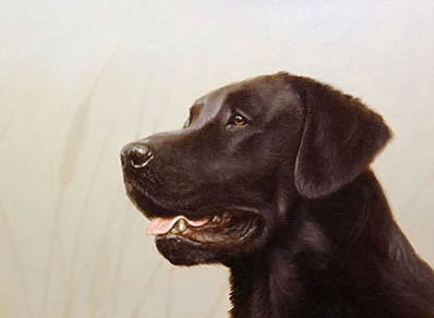 Black Lab Head Study (Self Publish) by John Silver