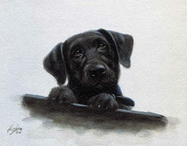 Black Lab Pup Study by John Silver
