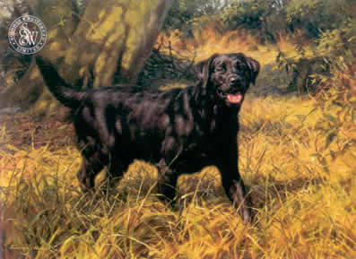 Black Labrador small