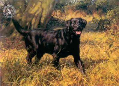 Black Labrador by Frederick J Haycock
