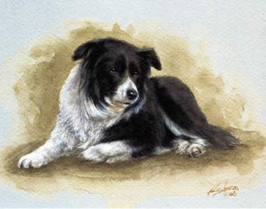 Border Collie Study by John Silver