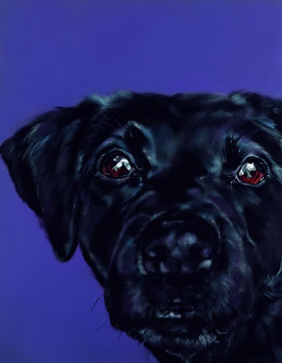 bright-eyed-black-labrador-6590