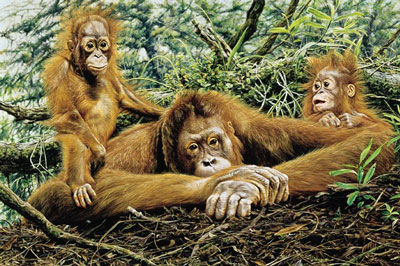But This Is Our Home - Orangutans by Alan Hunt