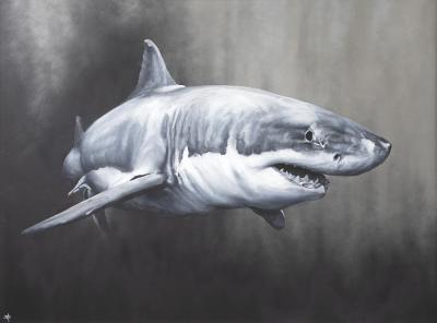 carcharodon-charcharias-30054