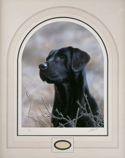 Classic Breed Black Labrador by John Silver