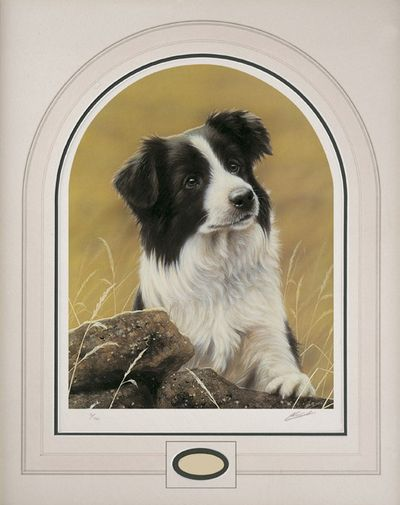 Classic Breed Border Collie small