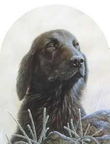 Classic Breed Flat Coated Retriever by John Silver