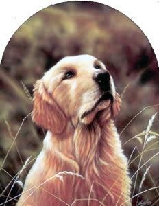 Classic Breed Golden Retriever by John Silver