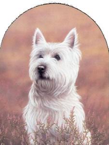 Classic Breed Westie by John Silver