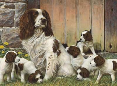 Dad's Army - Springer Spaniels