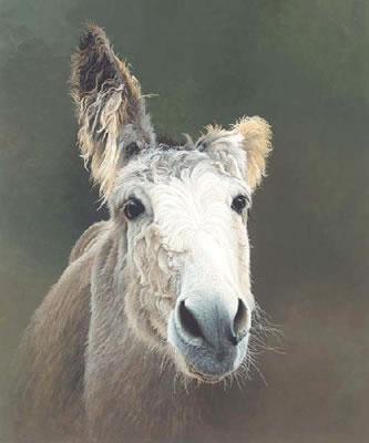 Des - Donkey by Paul James