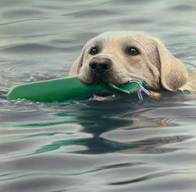 Dummy Run - Golden Retriever by John Silver