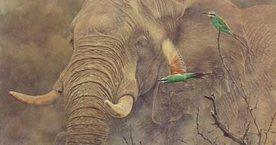 Eat My Dust - Elephant & Birds by Alan Hunt