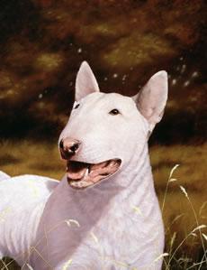English Bull Terrier by John Silver