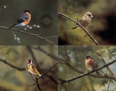 Finches - Set Of 4