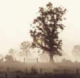 First Light by John Waterhouse