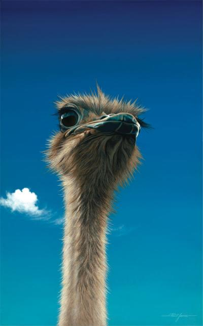 Germaine - Ostrich by Paul James