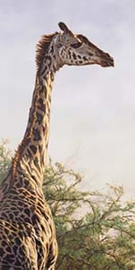 High And Mighty - Giraffe small