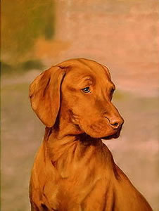 Hungarian Vizsla small