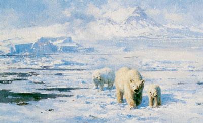 Ice Wilderness
