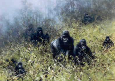 In The Mists Of Rwanda - Gorilla by David Shepherd