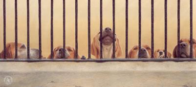 Jailhouse Rock (English Foxhound)