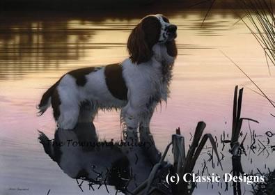 Jasper (Springer Spaniel) by Steven Townsend