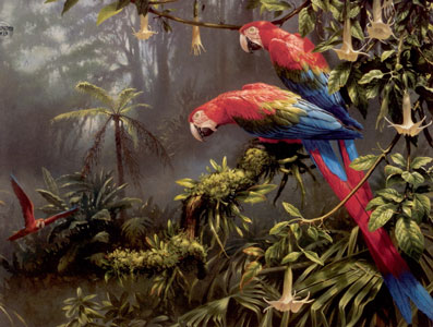 Jewels Of The Forest  - Parrots