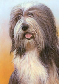 Just Dogs - Bearded Collie by Nigel Hemming