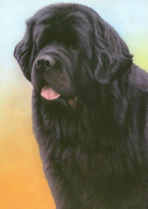Just Dogs - Black Newfoundland by Nigel Hemming