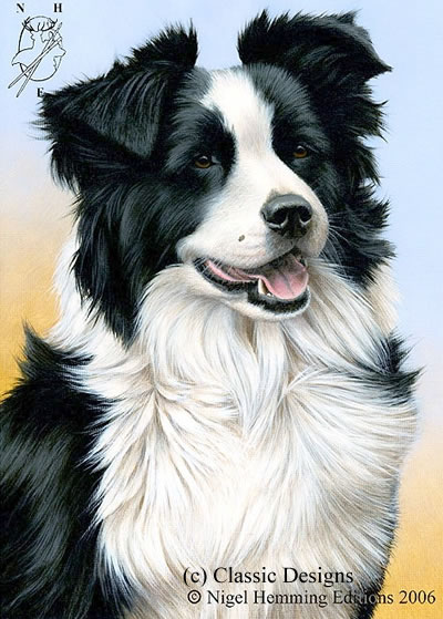 Just Dogs - Border Collie