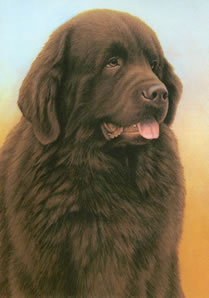 Just Dogs - Brown Newfoundland by Nigel Hemming