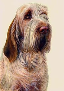 Just Dogs - Orange Roan Italian Spinone