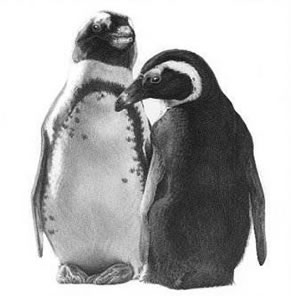 Just The Two Of Us - Penguins by Gary Hodges