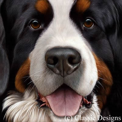 Larger Than Life - Bernese (Bc)