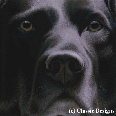 Larger Than Life - Black Labrador (Bc)