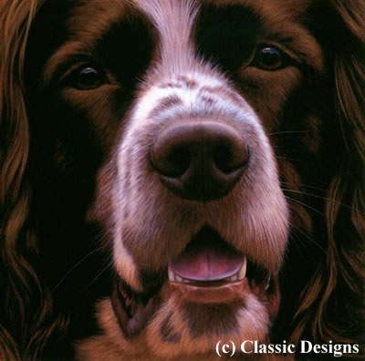 Larger Than Life - Springer Spaniel (Bc) small