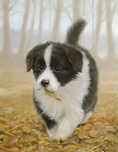 Litterbug! - Border Collie Pup by John Silver