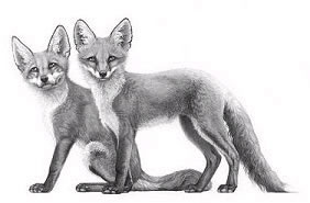 Little Foxes by Gary Hodges