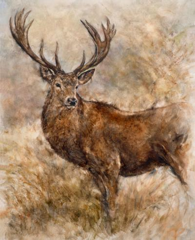 majestic-stag-18373