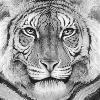 Majesty - Royal Bengal Tiger by Gary Hodges