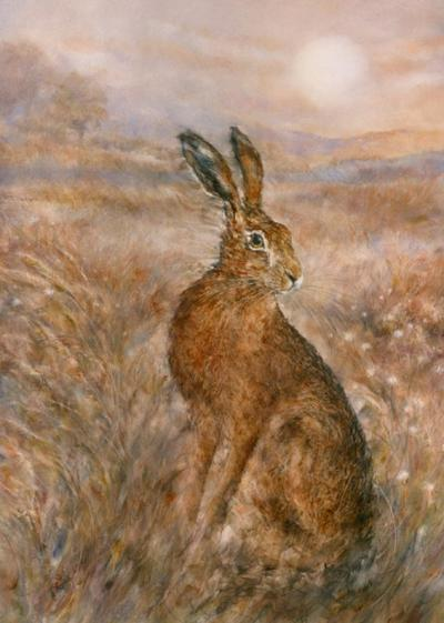 moonlight-hare-18372
