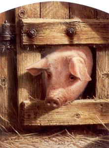 Nosy Parker - Pig
