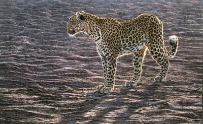 Okavango Apparition - Canvas by Alan Hunt